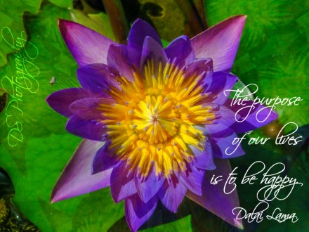 Purple Yellow Lotus