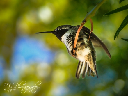 Hummingbird Friend