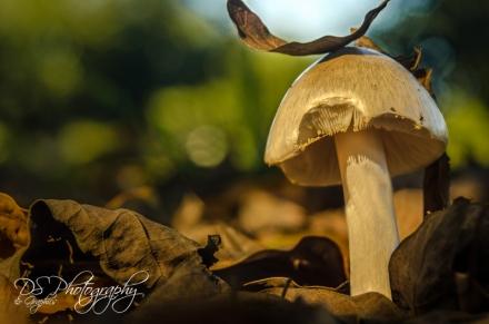Mushroom with Leaf