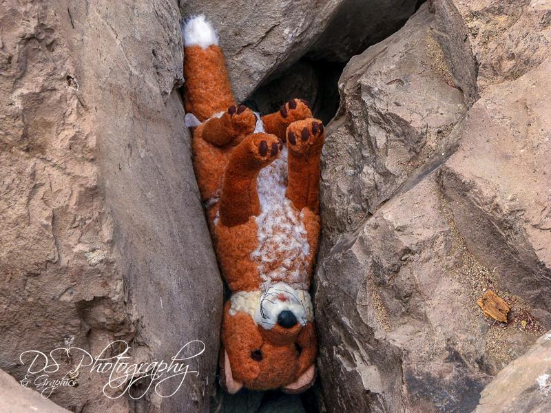 Object - Lost Stuffed Toy