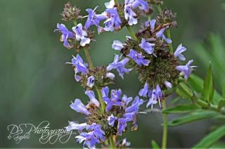 Wildflowers 2