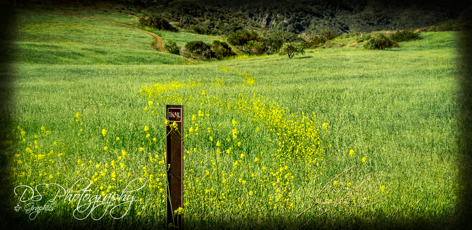 Yellow Trail of Wild Flowers