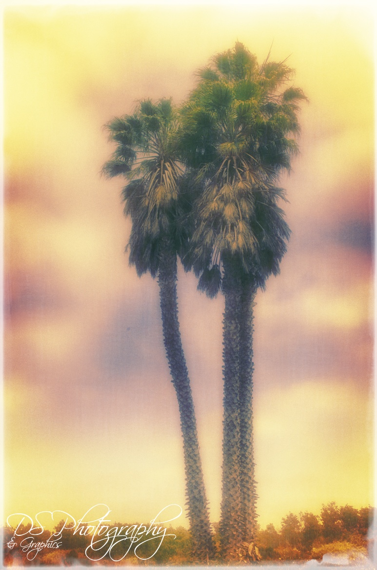 3 Tall Palm Trees
