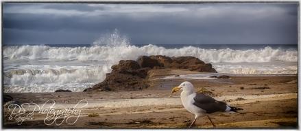 Photo Bombing Seagull