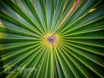 Weekly Photo Challenge zigzag - 1